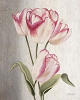 Parrot Tulips Fine Art Print