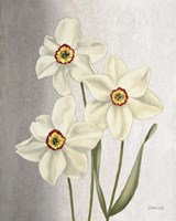 Spring Narcissus Framed Print