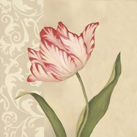 Cream Tulip Framed Print