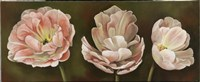 Summer Blossoms 2 Framed Print