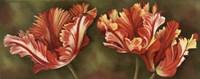 Summer Blossoms 3 Framed Print