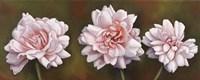 Summer Blossoms 5 Framed Print