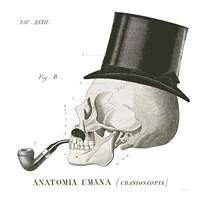 Dandy Bones II Framed Print