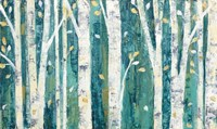 Birches in Spring Fine Art Print
