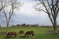 Horses Eating in Pasture Fine Art Print