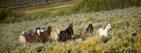 Horses Running through Weedy Field Fine Art Print