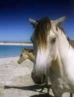 Single Horse on Beach Fine Art Print