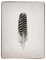 Feather I BW Framed Print