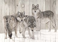 Three Grey Wolves on Wood Fine Art Print