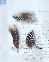 Plume Letters VI Fine Art Print