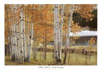 Birch Beauty Fine Art Print