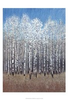 Cobalt Birches I Framed Print