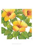 Watercolor Hibiscus III Framed Print
