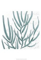 Aqua Marine I Fine Art Print
