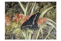 Butterfly in Nature III Fine Art Print