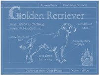 Blueprint Golden Retriever Framed Print