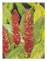 Red Tropical Flowers II Framed Print