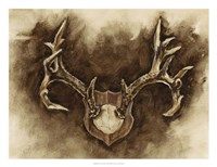 Rustic Antler Mount I Framed Print