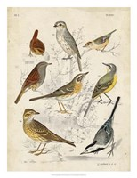 Gathering of Birds I Fine Art Print