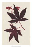 Japanese Maple Leaves I Fine Art Print