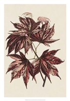 Japanese Maple Leaves II Fine Art Print