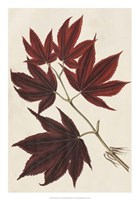 Japanese Maple Leaves III Fine Art Print