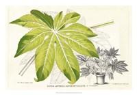 Fern Leaf Foliage I Fine Art Print