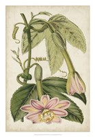 Passion Flower Botanical Fine Art Print
