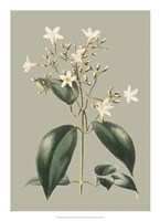 Botanical Cabinet I Fine Art Print