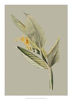 Botanical Cabinet III Fine Art Print
