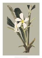 Botanical Cabinet IV Fine Art Print