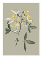 Botanical Cabinet VI Fine Art Print