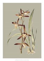 Botanical Cabinet VII Fine Art Print
