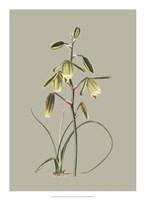 Botanical Cabinet IX Fine Art Print