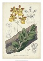 Orchid Delight I Fine Art Print