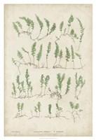 Bradbury Ferns III Fine Art Print