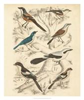 Avian Habitat V Fine Art Print