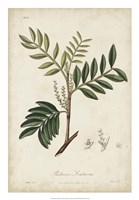 Medicinal Botany II Fine Art Print