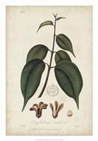 Medicinal Botany IV Fine Art Print