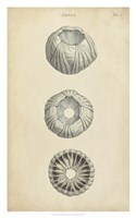 Cylindrical Shells I Fine Art Print