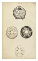 Cylindrical Shells II Framed Print