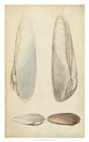 Marine Mollusk II Fine Art Print