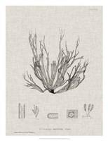 Charcoal & Linen Seaweed I Fine Art Print