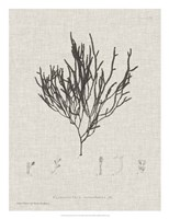 Charcoal & Linen Seaweed IV Fine Art Print