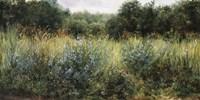 Dorset Wildflowers Fine Art Print
