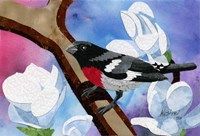 Rose Breasted Grosbeak Fine Art Print