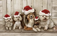 Dogs Christmas Fine Art Print