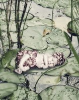 Sleeping on Lily Pads Fine Art Print