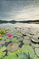 Morning Lilies Fine Art Print