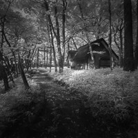 Cabin in the Woods Fine Art Print